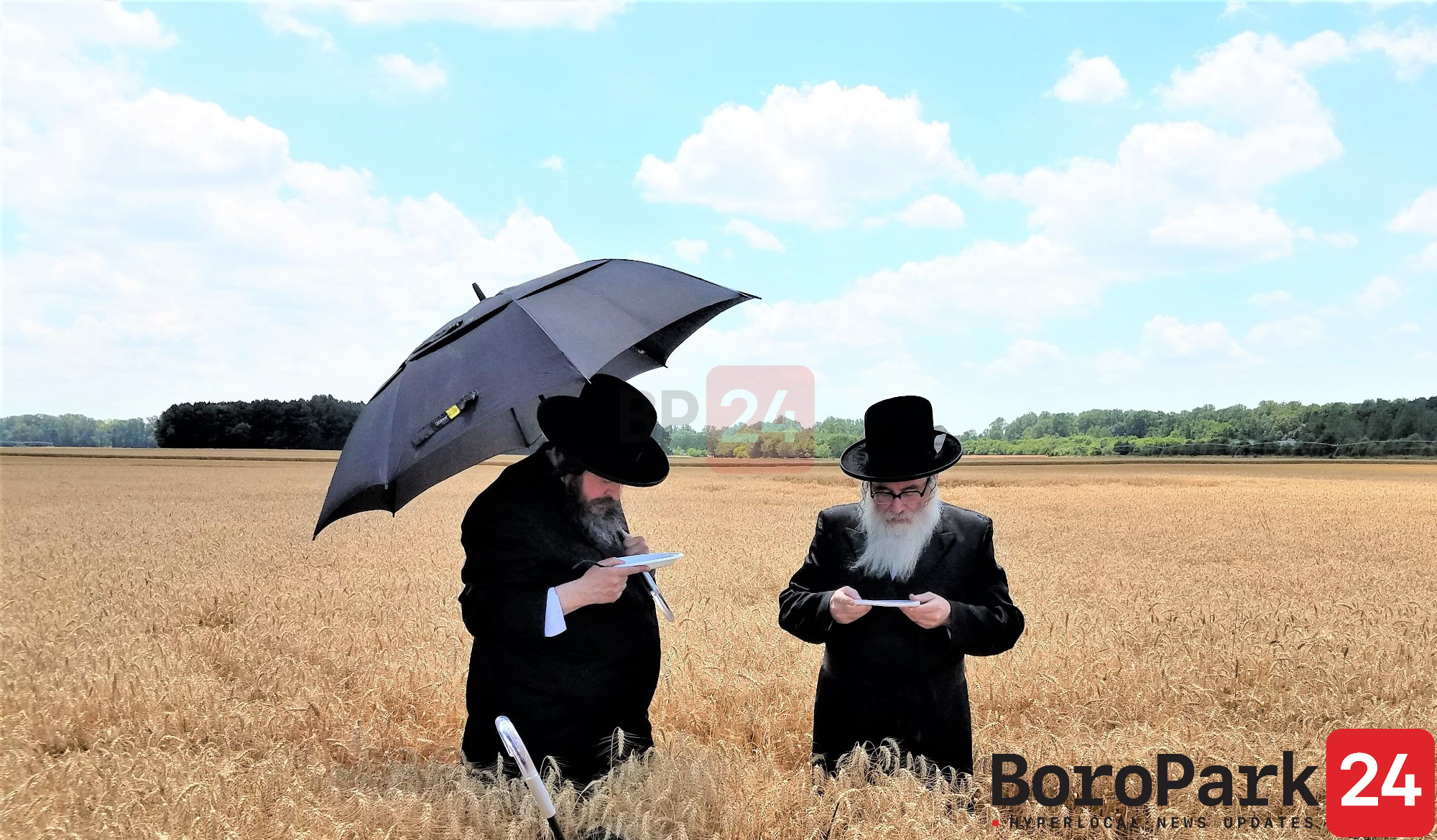 Rabonim of Debretzin, Brezna and Raved Bes Din Avnei Sahyesh Cutting Wheat for Matzos in Delaware